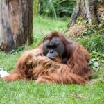 KinderUni_Menschenaffen 1_Foto Zoo Dortmund_Jennifer Beckmann