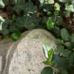 Lückenfüller_Gruenes mit Stein